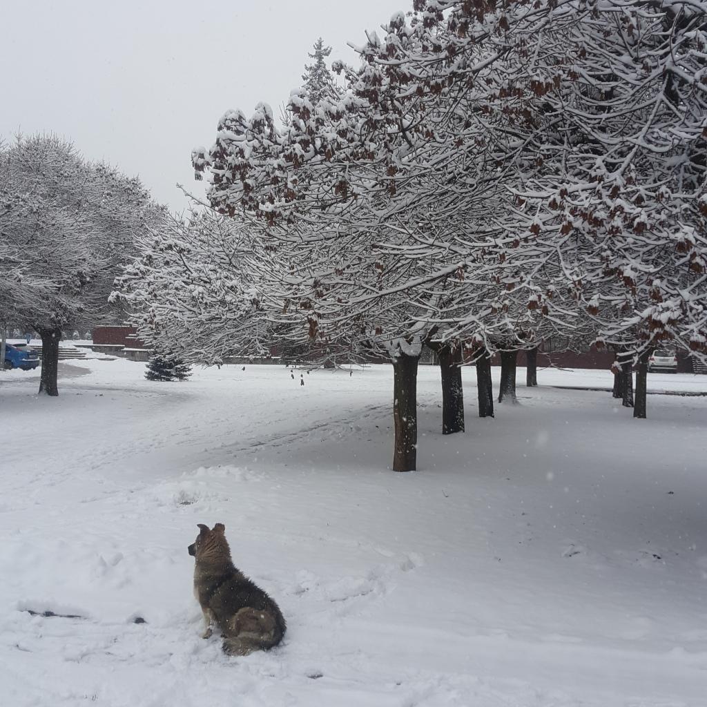 صورة لشجر مغطى بالثلوج